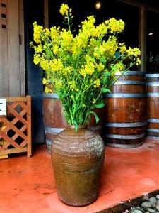 今月から春らしく、売店前では菜の花を飾っております。