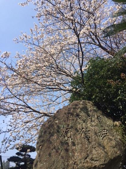 記念碑と桜